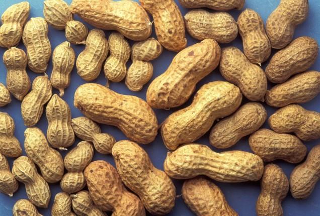 peanuts-815565_1280